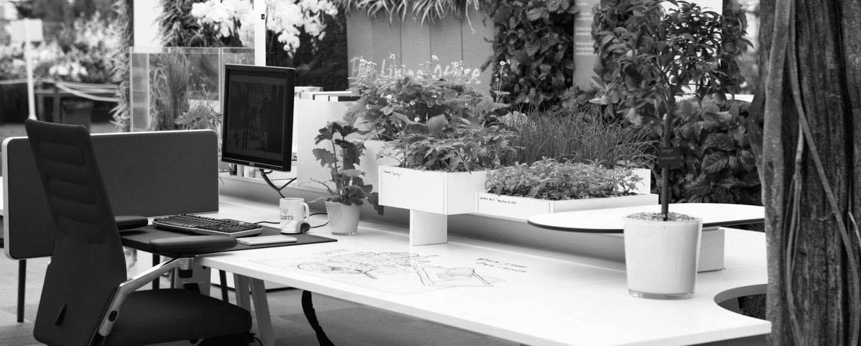 Piante da ufficio quali mettere e perche 39 sfera ingegneria - Piante da ufficio resistenti ...